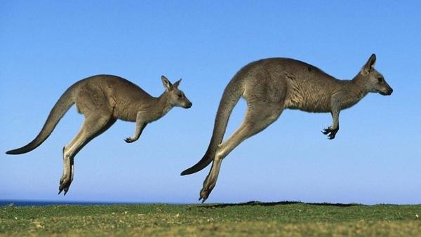 【11-12月】澳大利亚新西兰南北岛15天全景
