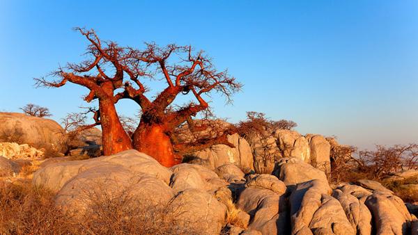 【3-9月】皇牌四国 肯尼亚津巴布韦赞比亚博茨瓦纳12天游