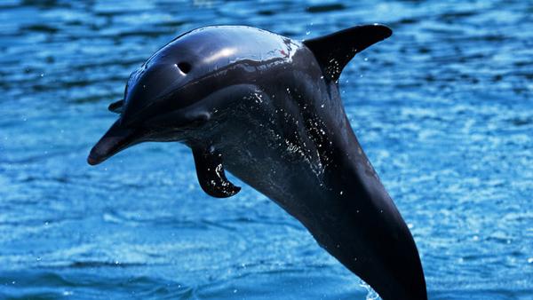【國泰航空香港直飛馬尼拉】菲律賓 海豚灣 珊瑚花園出海浮潛+藍洞 馬尼拉大雅臺 五天四晚純玩團