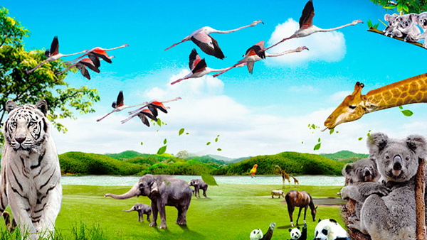 深圳至广州番禺长隆野生动物世界直通车一日游 天天发团 保证成团