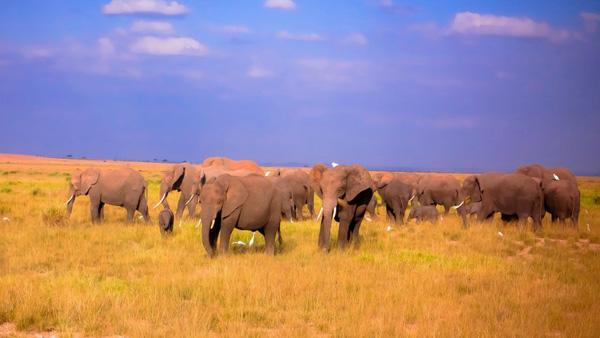 2020年春节肯尼亚旅游报价汇总