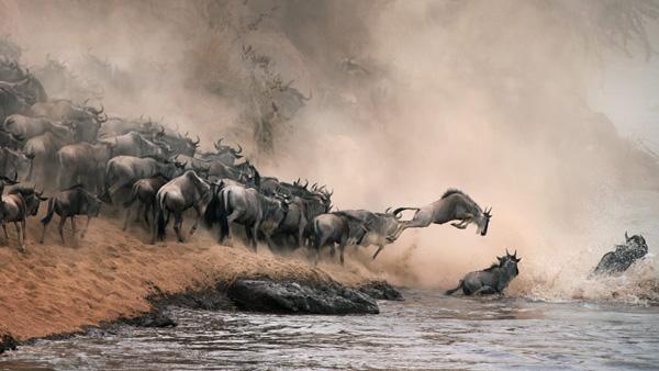 【5-11月】肯尼亚狂野7天之旅(广州往返KQ)