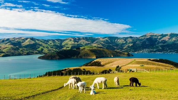 【4-6月】新西兰南北岛9天纯净游(7晚)4星