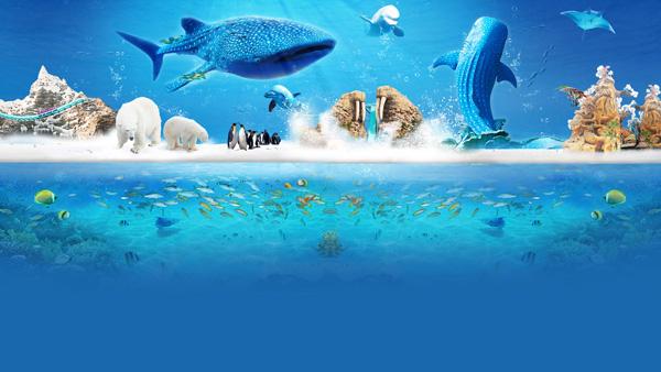 【6月】M5线B 珠海长隆海洋王国5D视觉盛宴、烟花汇演)+中山长江水世界(长隆迎海公寓酒店)两日游